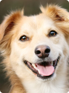 dog_dentistry pic